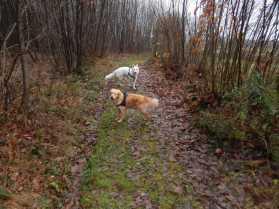 Sortie chiens libres - 17 Décembre 2017 (13)