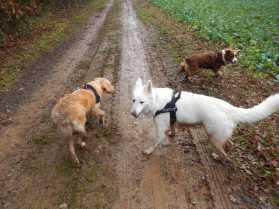 Sortie chiens libres - 17 Décembre 2017 (25)