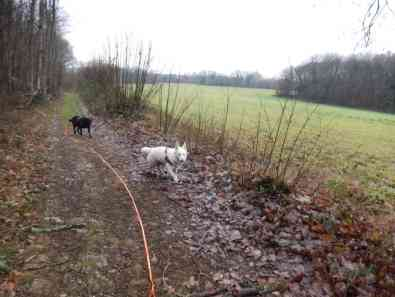 Sortie chiens libres - 17 Décembre 2017 (6)