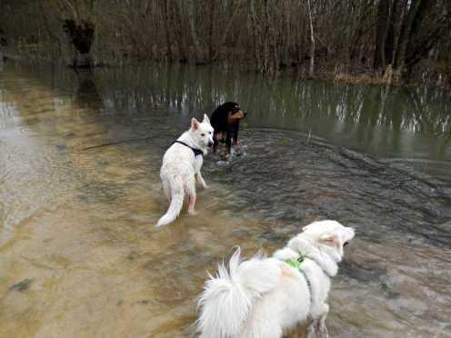 Sortie chiens libres - 28 Janvier 2018 (10)
