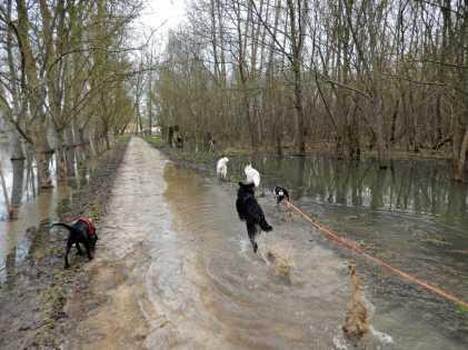 Sortie chiens libres - 28 Janvier 2018 (12)