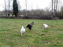 Sortie chiens libres - 28 Janvier 2018 (26)