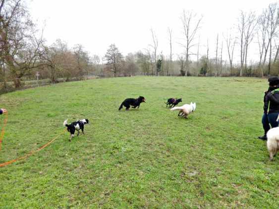 Sortie chiens libres - 28 Janvier 2018 (55)
