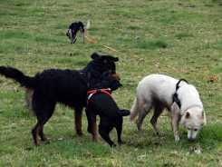 Sortie chiens libres - 28 Janvier 2018 (60)