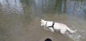 Sortie chiens libres - 25 Mars 2018 (24)