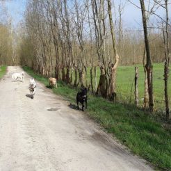 Sortie chiens libres - 25 Mars 2018 (42)
