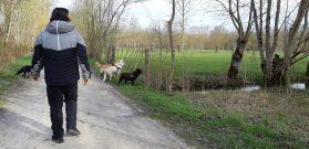 Sortie chiens libres - 25 Mars 2018 (52)