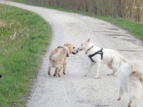 Sortie chiens libres - 25 Mars 2018 (60)