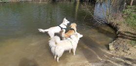 Sortie chiens libres - 25 Mars 2018 (7)