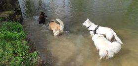 Sortie chiens libres - 25 Mars 2018 (9)