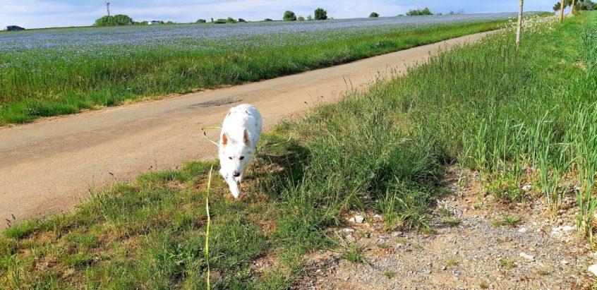 Promenade en Abs - 02 03 et 04-05-2018 (15)