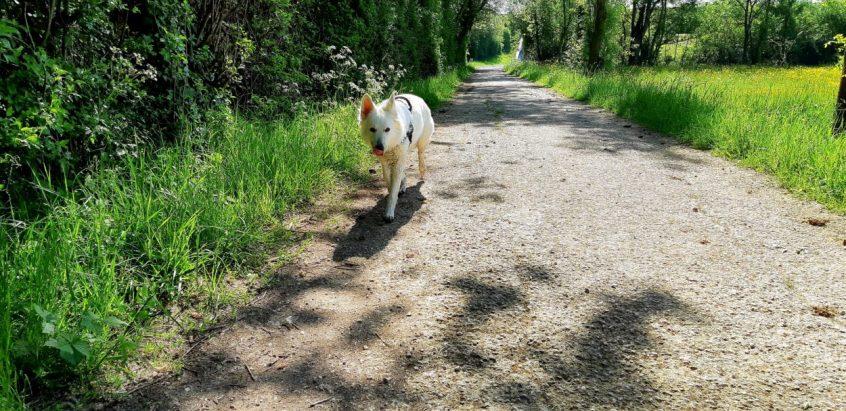Promenade en Abs - 02 03 et 04-05-2018 (39)
