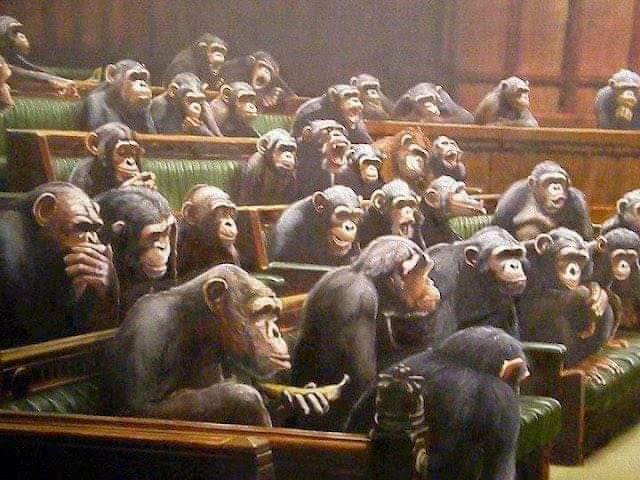 gorillas in a british parliamentary chamber