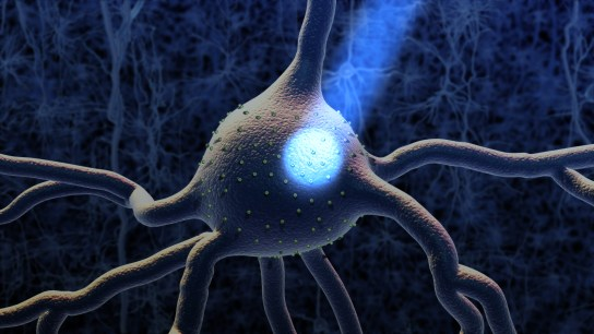 Image of a neuron - National Science Foundation