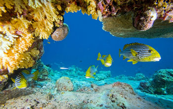 Image of fish in a coral reef.