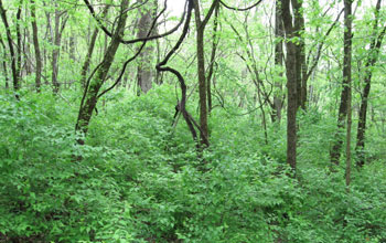 Global Plant Diversity Hinges on Local Battles Against ...