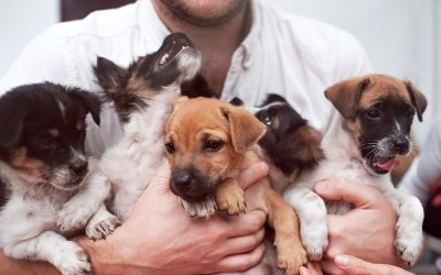 Statewide crackdown on illegal puppy factories