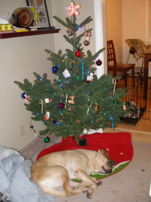 Baxter's Christmas