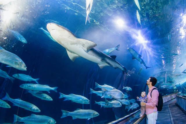 クルーズのあとは水族館で