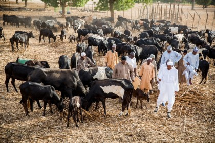 President Buhari in His Farm