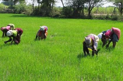 fao-africa-rice-center-farmers