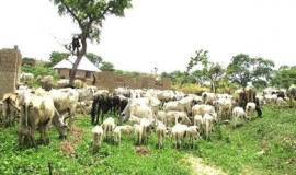 Image result for Katsina govt holds stakeholders meeting on Grazing Reserves encroachment