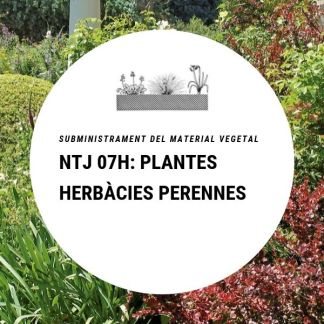 NTJ 07H Plantes herbàcies perennes