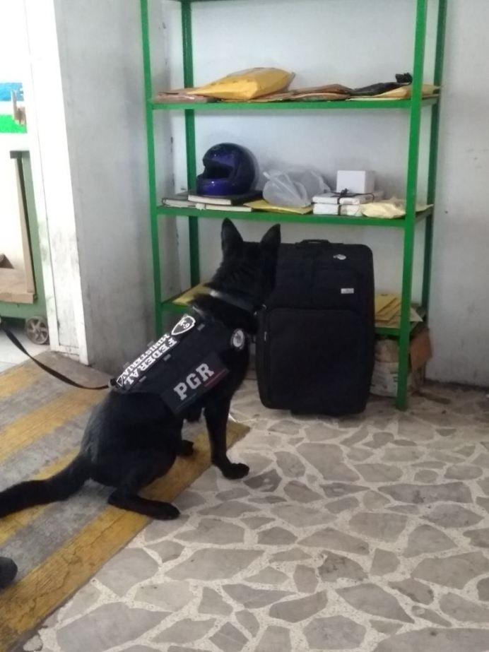 mariguana_paqueteria04
