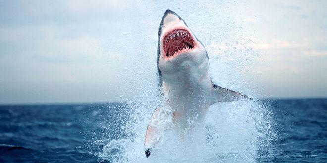 [Imagen: shark-1280p-660x330-c.jpg]