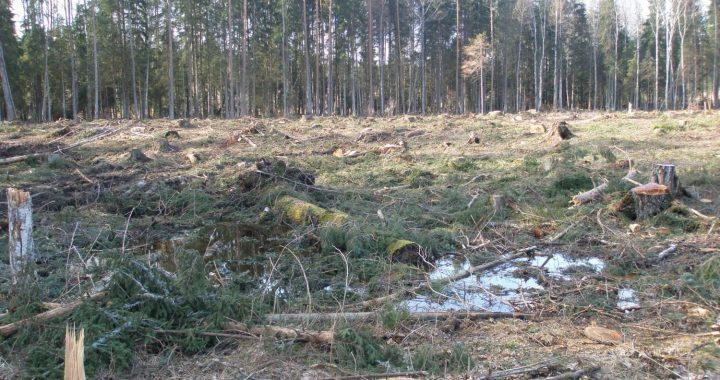 Aicina nepieņemt grozījumus noteikumos par koku ciršanu un rosina iedzīvotājus parakstīt petīciju
