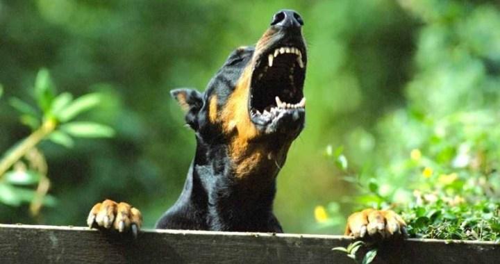 Iespiež durvīs un sakož kaimiņu suns