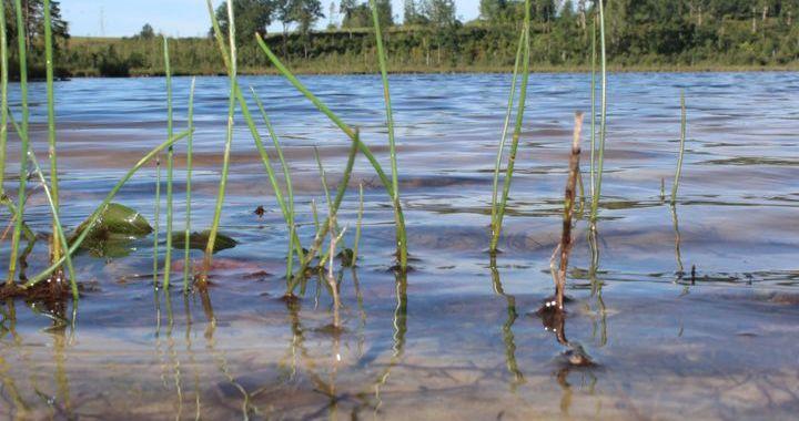 Kāpēc apgrūtināta piekļūšana Jumpravas ezeram?