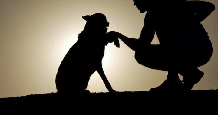 Izglābj vīrieti un viņa suni