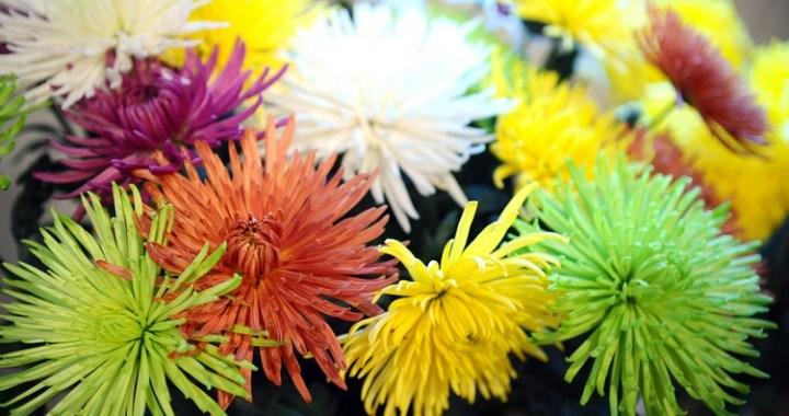 Kāpēc ziedi mainījuši krāsu?