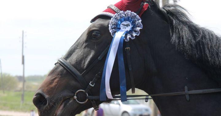 Uzņēmums «Ivetas zirgi» nosvinējis dzimšanas dienu