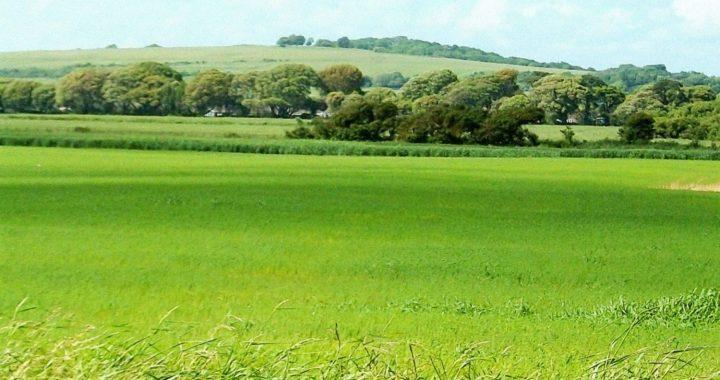 Uzticams atbalsts jaunajiem lauksaimniekiem – Lande.lv