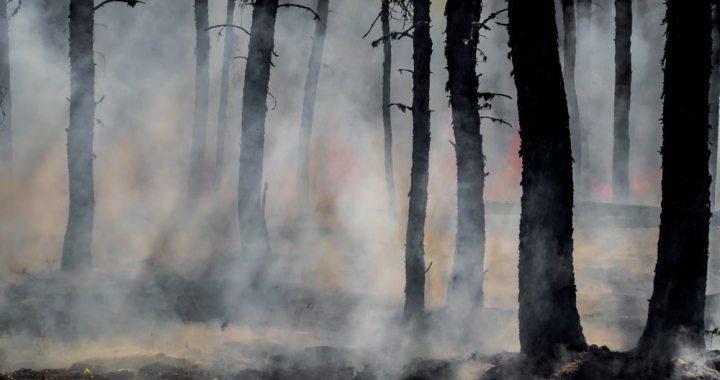 Brīvdienās dedzis mežs Kandavā un gāzti koki Tukuma pusē