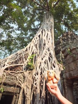 el guauguau y el árbol -Wat Prohm - Camboya