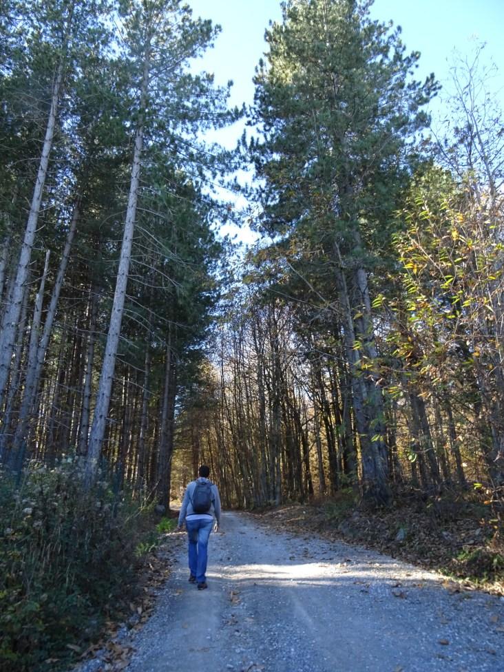 bosque-abbadiasansalvatore-nubesviajeras