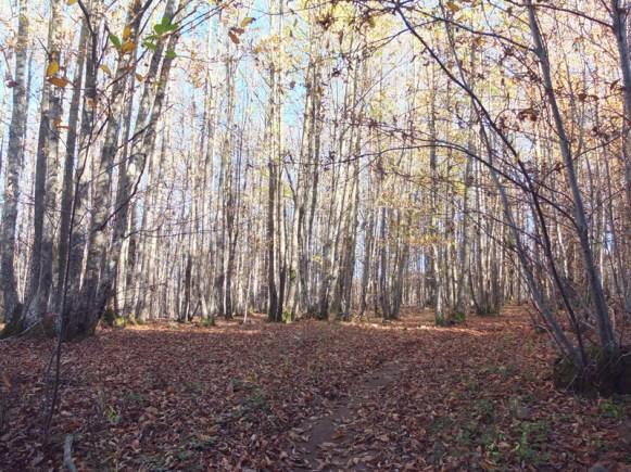 bosque-abbadiassalvatore-nubesviajeras