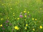 Forest of Bowland AONB - Lowgill Meadow