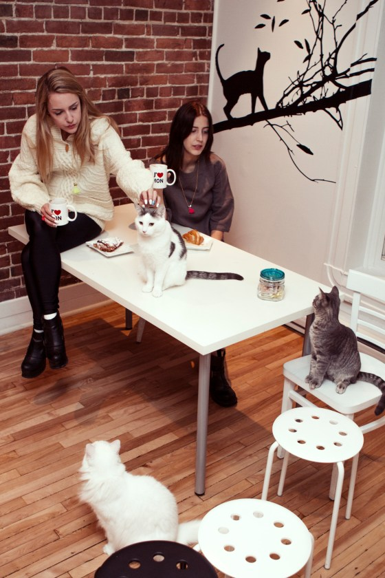 Models Girls Montreal Cats Cafe