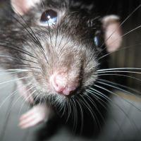 Hallaron heces de rata en la Escuela N°13 de Maschwitz
