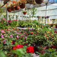 Por primera vez en la historia, la Fiesta Nacional de la Flor será virtual