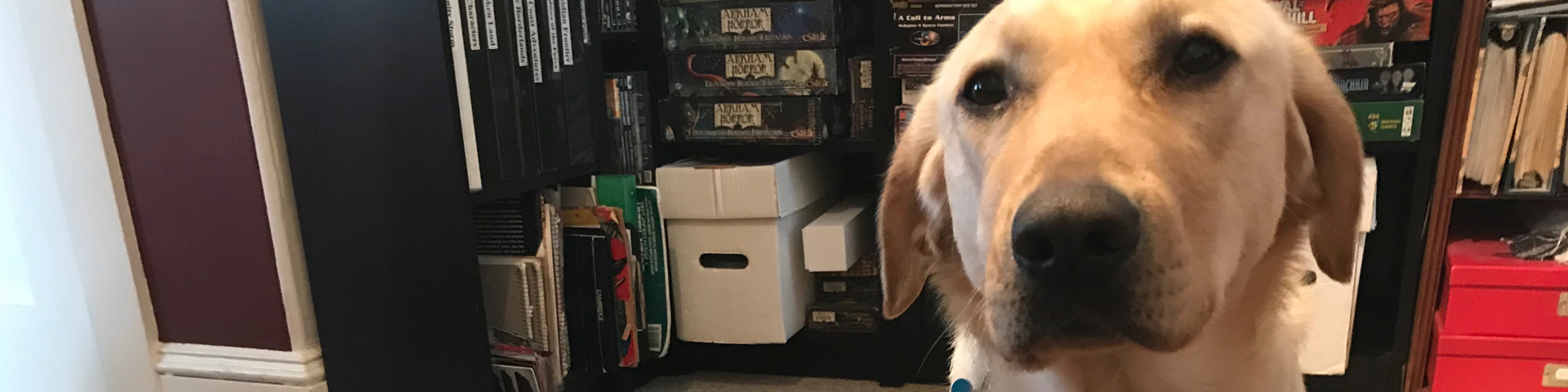 A yellow Labrador Retriever in front of a bookshelf filled with role-playing game books and board games.