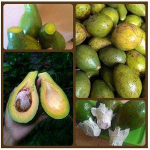 avocado nulisin