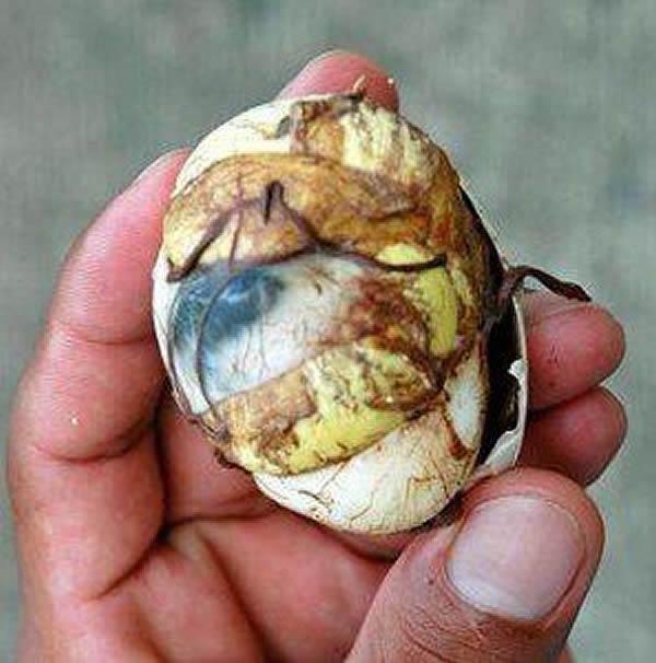 Foetus de poussin