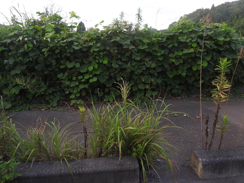 Fukushima plants