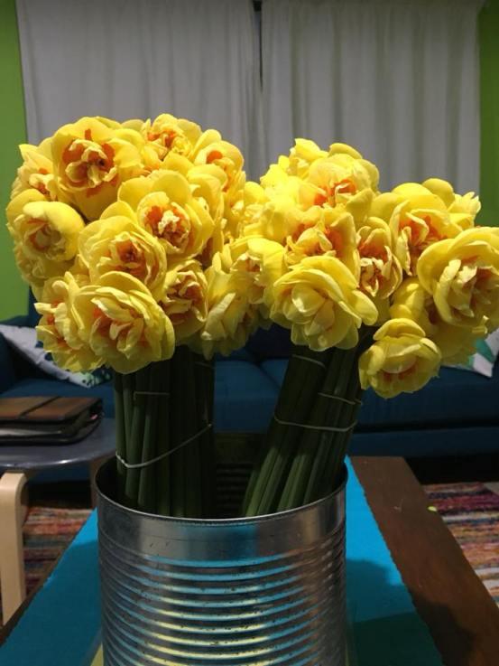 Clandon daffodils