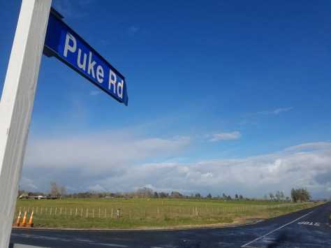 Puke Rd, where the campervan was abandoned. Photo Annette Taylor
